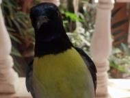Pták. Agonda, Goa, Indie