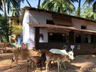 Central Bar - Agonda, Goa, Indie