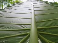 Tropická příroda. Agonda, Goa, Indie