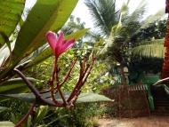 Ubytování: Agonda, Goa, Indie. Příroda