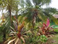 Ubytování: Agonda, Goa, Indie. Okolí