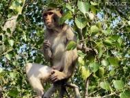 Opice na stromě před balkónem