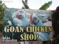 Kuřata v Arambolu. Goa, Indie