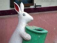 Odpadkový zajíc. Arambol, Goa, Indie