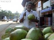 Čerstvé kokosové ořechy na ulici v Goa - Indie