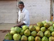 Čerstvé kokosové ořechy na ulici v Goa.