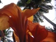 Květy a palmy poblíž pobřeží v Goa - Indie
