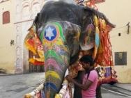 Příprava slona na slavnost. Jaipur, Rajasthan