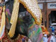 Slon na slavnosti. Jaipur, Rajasthan