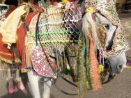 kun-Jaipur-Rajasthan-Indie