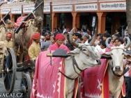 Slavnosti- Jaipur-Rajasthan-Indie
