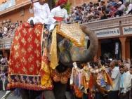 Slon na oslavě. Jaipur, Rajasthan, Indie