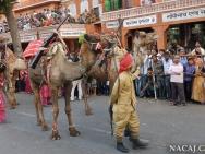 Velbloudi. Jaipur, Rajasthan, Indie