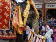 Nazdobený slon na oslavě. Jaipur, Rajasthan, Indie