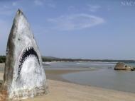 Žralok v Palolem, Goa. Indie