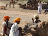 turban-velbloud-pushkar-raj