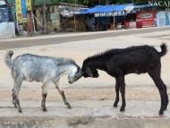 kozy-Rameshwaram-Tamil-Nadu-I