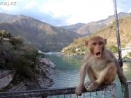 Opice na mostě přes řeku Ganga - Rishikesh, Indie
