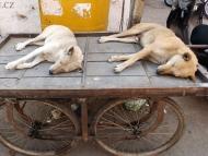 Psi. Udaipur, Rajasthan, IIndie