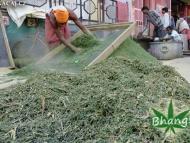 BHANG - příprava z marihuany ve Varanasi, Indie