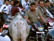 Hustá doprava v ulicích Varanasi. Indie